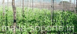 HORTOMALLAS malla para soporte agricola, ejote, envarado de hortalizas, malla para entutorar, envarado, entutorado, rafia, malla espaldera, malla tutora, malla para entutorar, hortalizas, cultivo de pimientos, cultivo de tomates, rafia, pita